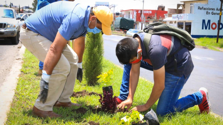 Plantación de más de 300 plantas en el camellón de la Av. Morelos
